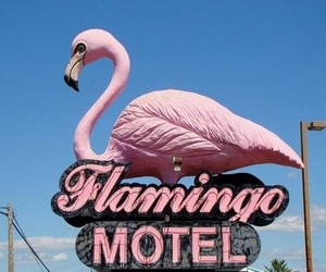 flamingo, motel, and pink image