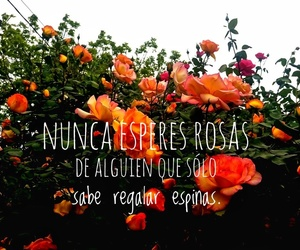 frases, me, and rosas image