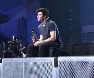 rose, shawn mendes, and boy image