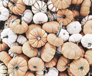 background, mini, and pumpkins image