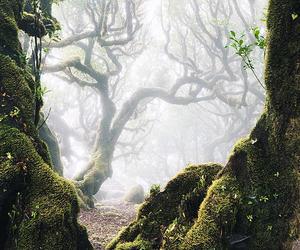 nature, belleza, and paisaje image