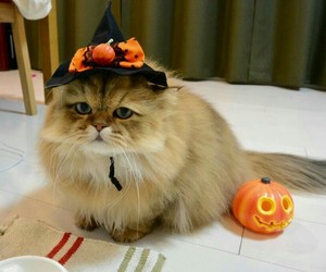 cat, Halloween, and jack-o-lantern image