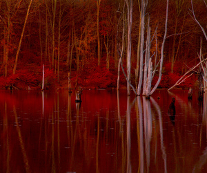 autumn, burgundy, and dead image