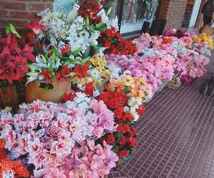 flores color lindo image