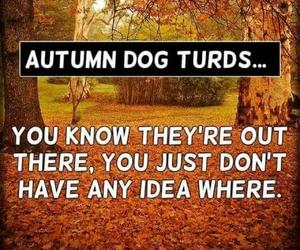 autumn, dog, and walking image