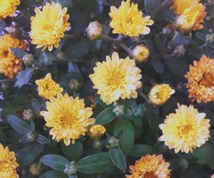 flowers, plants, and yellow image