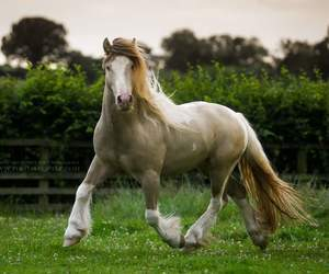 equine, free, and grass image