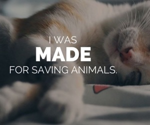 animal, veterinary, and cat image