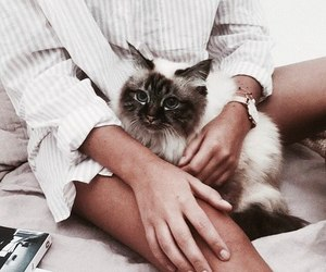 aesthetic, cats, and girls image