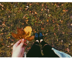 autumn, beautiful, and bright image