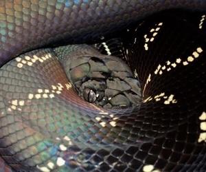 snake, animal, and aesthetic image