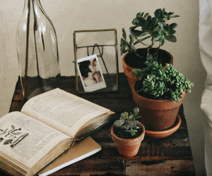 books, cozy, and plants image