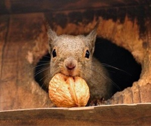 squirrel, animal, and cute image