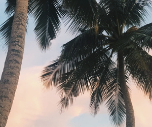 aesthetic, palm tree, and tumblr image