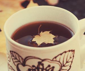 autumn, leaf, and autumn leaf image