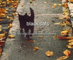 autumn, black cats, and candles image