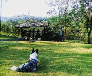 dog, paradise, and green image