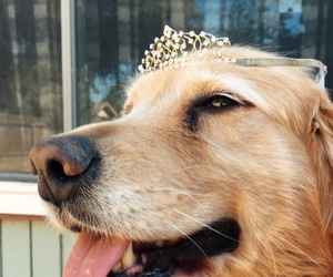animal, dog, and princess image
