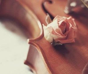 violin, rose, and music image