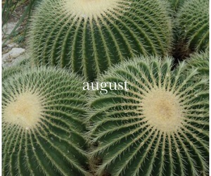 cactus, theme, and plants image