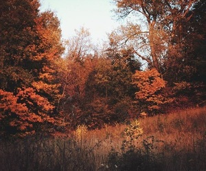 aesthetic, autumn, and cozy image