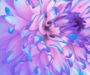 beautiful, beauty, and color image