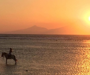 sunset, horse, and sea image