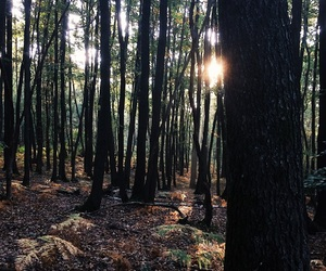 fall, sun, and forest image