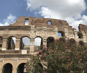 colosseum, flowers, and italy image