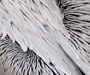 birds, feathers, and pattern image