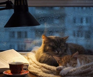 cat, rain, and autumn image