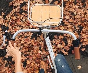 autumn, leaves, and bike image