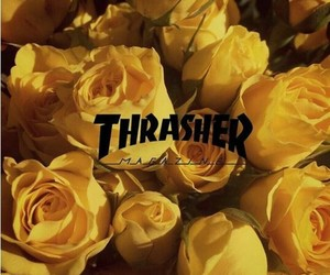 yellow, rose, and thrasher image
