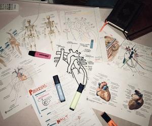 anatomy, derek, and gray image