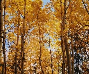 autumn, beautiful, and colourful image