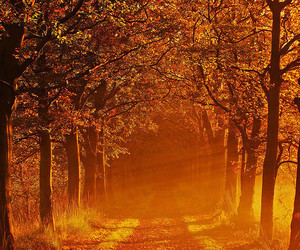 photography, nature, and autumn image
