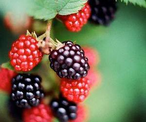 berries, fruit, and blackberry image
