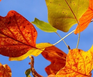 autumn, blue sky, and colorful image