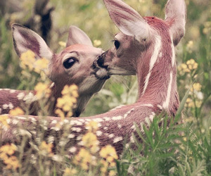 animal, kiss, and deer image
