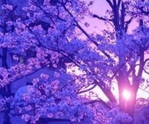 purple, tree, and flowers image