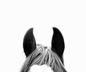 horse, animal, and pet image