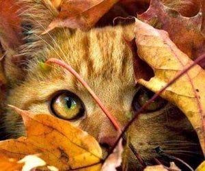 cat, leaves, and animal image
