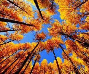 tree, autumn, and fall image