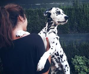 baby, blackandwhite, and dog image