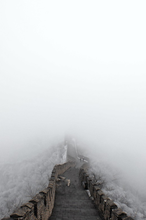 fog and nature image