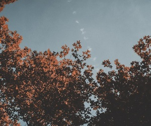 autumn, sky, and trees image