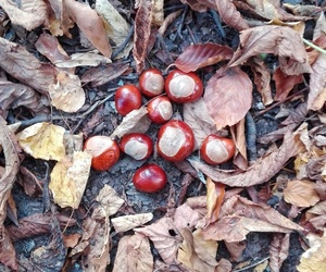 autumn, chestnuts, and fall image