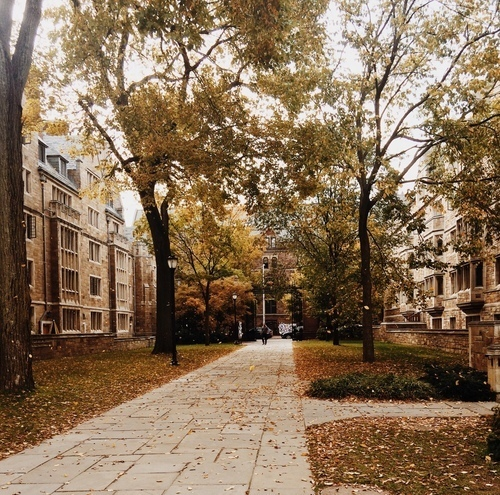 autumn, college, and leaves image