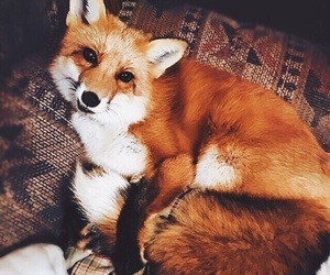 animal, awesome, and cozy image