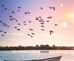 background, beautiful, and birds image